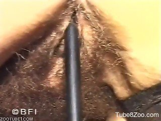 MILF invited dog to fuck her hairy pussy